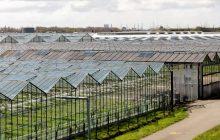Haalbaarheid van waterbank in Westland onderzocht